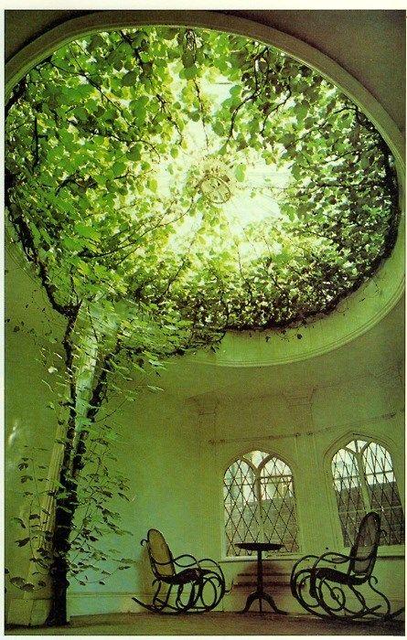 Das Licht das durch das Blätterdach scheint, verbreitet eine wunderschöne Atmosphäre #pflanzenfreude:
