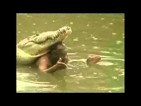 Chito y Pocho, la amistad de hombre y cocodrilo - YouTube