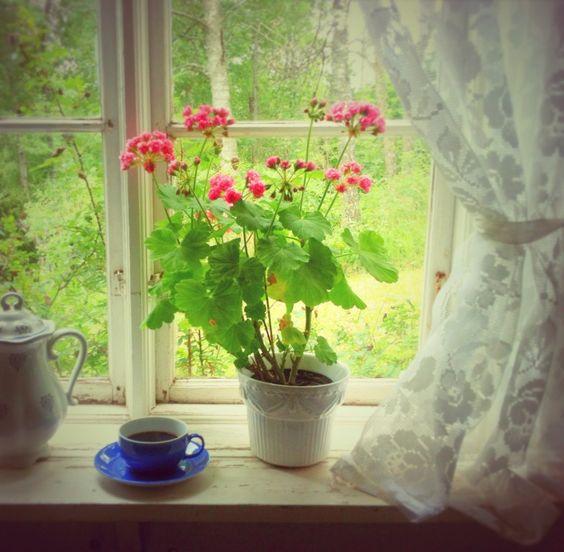 geranium: