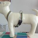 tutorial: How To Make A Small Dog Harness With Grosgrain Ribbon