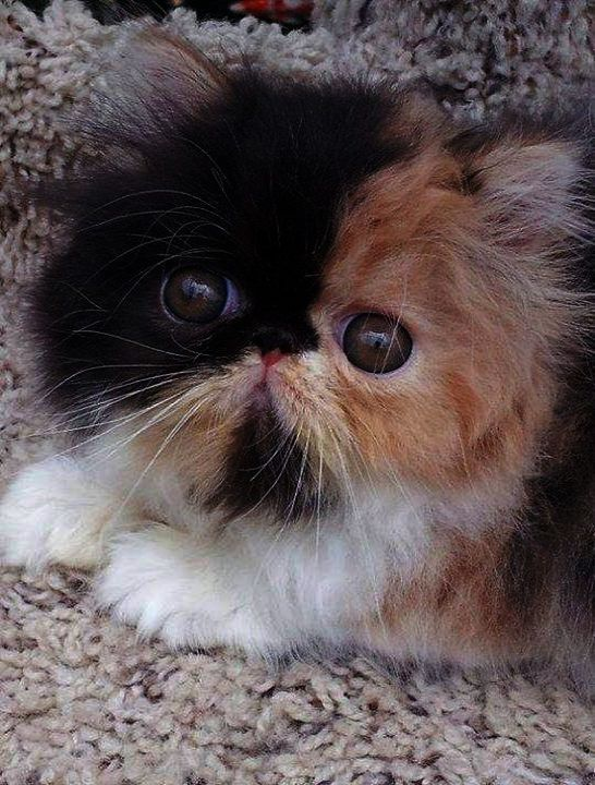 I Ll Protect You Human Kitten Pictures Beautiful Cats Cute Cats
