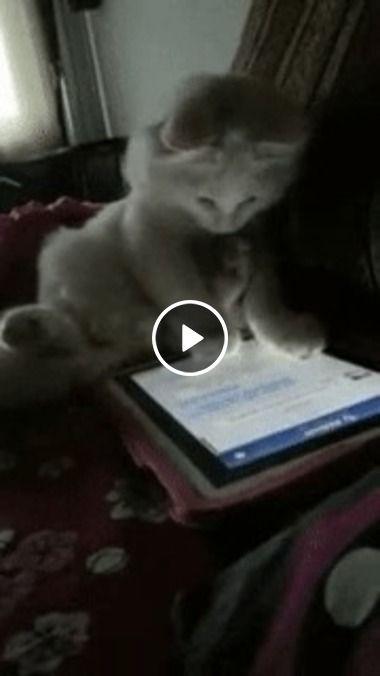 Gato conectado e estressado na net