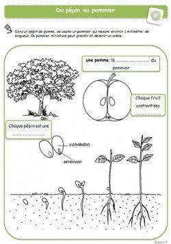 Le petit cartable de Sanleane: La germination - cycle de vie des plantes en est un bel exemple