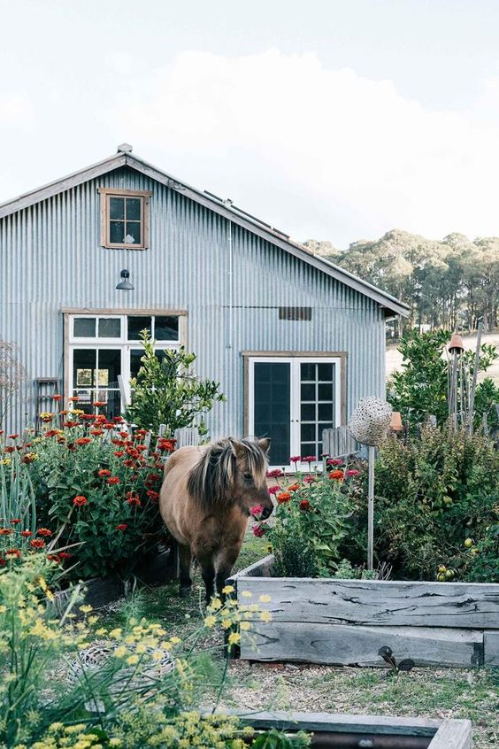 Black Barn Farm, a family Farm in north-east Victoria is also home to a pick-your-own Apples venture. Read the story of how two passionate food-growers and permaculture experts turned their dream of a small-scale farm into a reality.