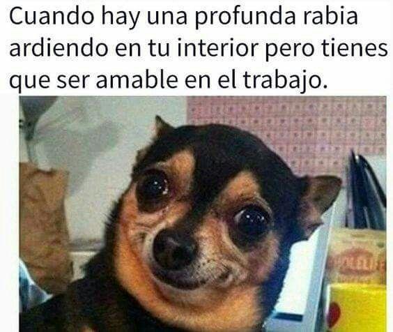 Pin De Luisa Fernanda Torres En Memes Memes Divertidos Chistes Graciosos De Animales Memes Divertidos Sobre Perros