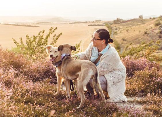 Danke An Geraldine Friedrich Fur Diese Traumhaften Bilder So Traumhaft Schon Kann Der Urlaub Im Harz Sein Aufge Urlaub Mit Hund Ferien Mit Hund Harz Urlaub