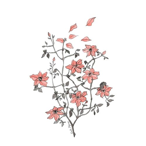 Tumblr Transparent Flower Drawing | Bg + pngs | Pinterest ...