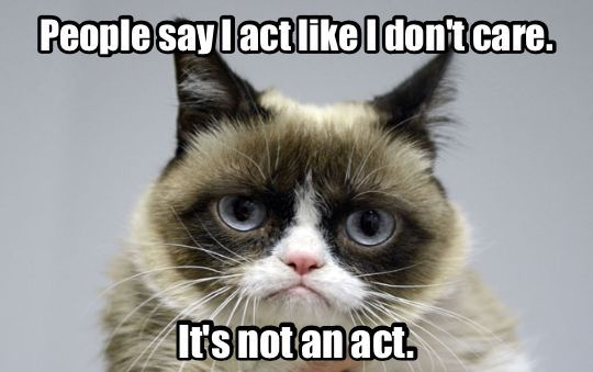 More And More About Some Things People And Situations Funny Grumpy Cat Memes Grumpy Cat Humor Grumpy Cat Meme