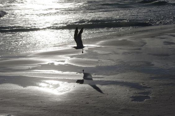Seagull, Destin Jetties (camera)