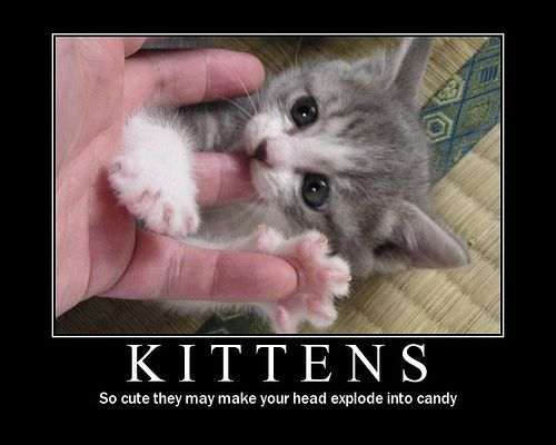 kittens being silly - Google Search