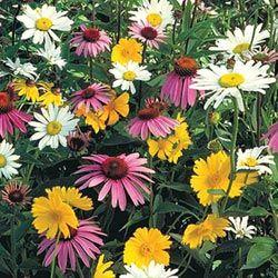 Shade mix wildflowers.