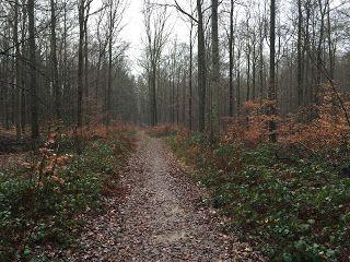 Laufend gebloggt: Mühlenbachtal - Brunnenweg