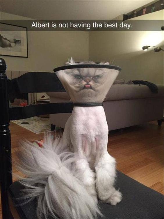 Some really good ones in this Funny Animals Dump A Day...like this one...Don't want to be next to him when the cone of shame comes off!: