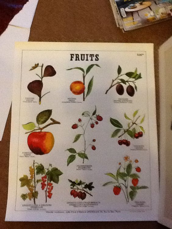 Deyrolle Planche Fruits