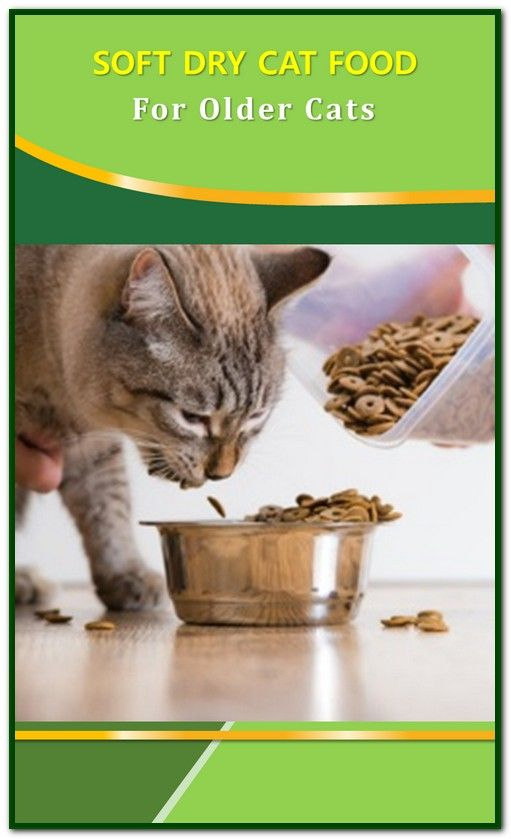 Soft Dry Cat Food For Older Cats Top 5 Soft Dry Cat Foods For Senior Cats Or Cats With Dental Issues Our Top Picks For T Cat Food Dry Cat