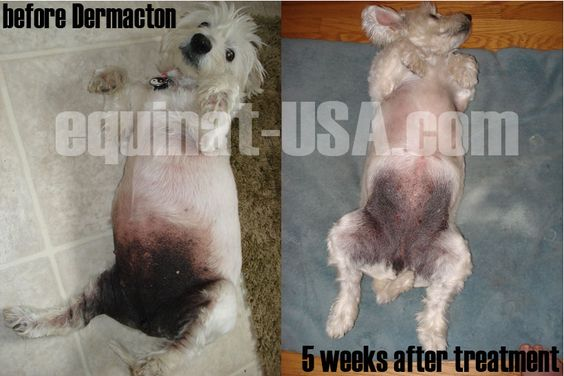Natural Remedies For Westie Skin Problems