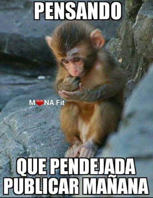 Postales De Amor Http Videowhatsapp Net Postales De Amor 808 Html Vwhatsapp Amor Frases Funny Spanish Memes Funny Memes Cute Animal Memes