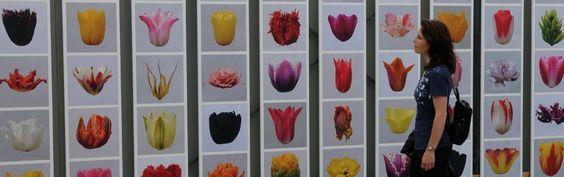 Kunst im Gewächshaus - Kunstwerke rund um Blumenzwiebeln/Zwiebelblumen in Fluwel's Tulpenland