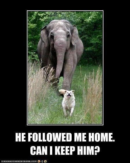 He followed me home can we keep him :-)