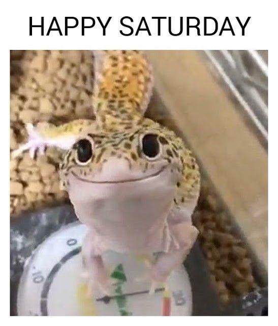 Happy Saturday Lizard Annoying Kids Friday Meme Funny Memes
