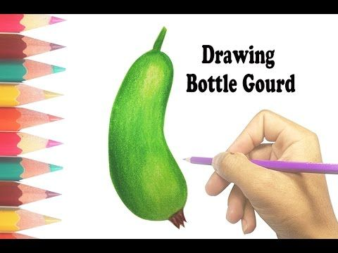 How To Draw A Bottle Gourd List Of Fruits And Vegetables