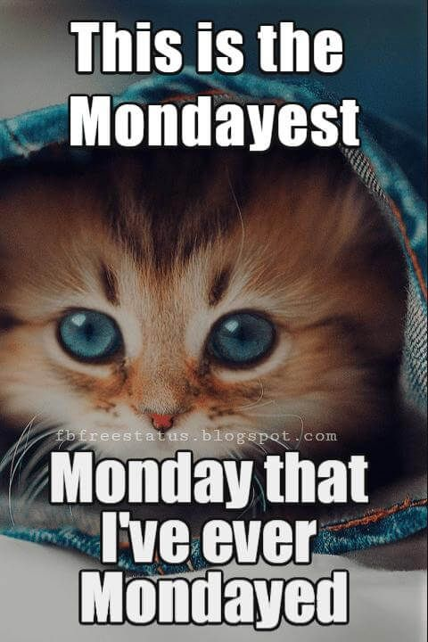 Happy Monday Funny Meme : happy, monday, funny, Funny, Inspirational, Monday, Morning, Quotes, Images, Humor, Quotes,