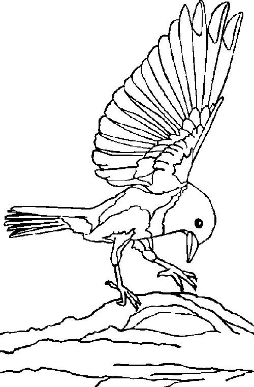 Bluebirds In The Americas Coloring Sheet Also See The Category