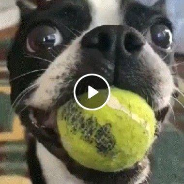 Inventaram o brinquedo perfeito para nossos cachorrinhos