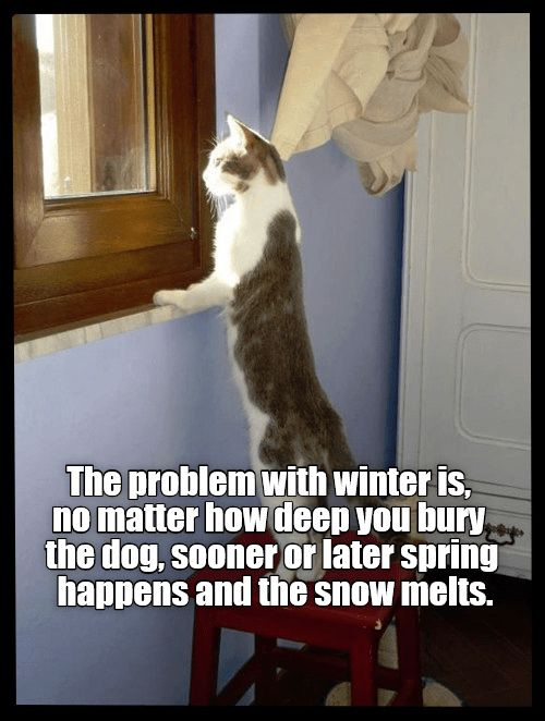 Pin By Cat Furnature Co Uk On Cat Comedy Animals Cats Funny Cat Pictures