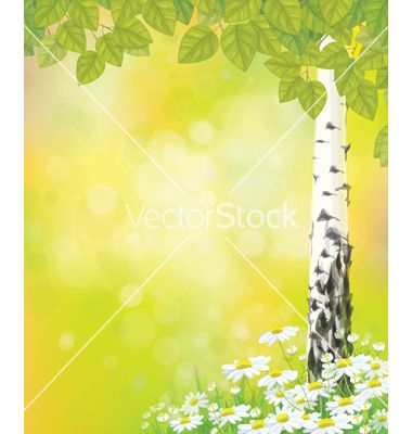 Spring Birch tree flower vector  - by rvika on VectorStock®