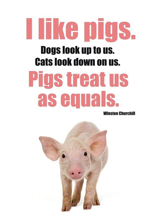 :) I knew I liked pigs for a reason