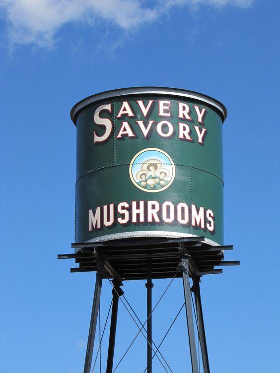 savery savory mushrooms water tower