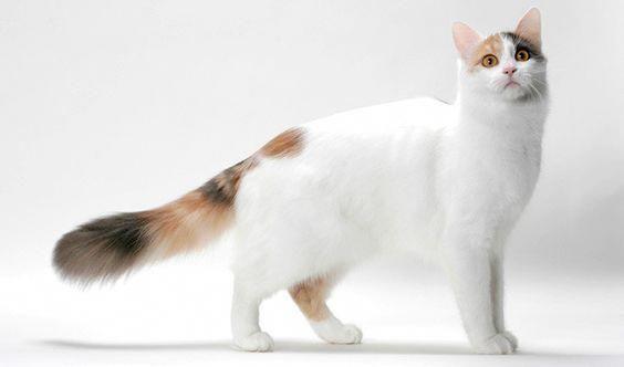 Cats Reddit Cancatsgetlice Fleashampooforcats Fluffycatsbreeds Turkish Van Cats Angora Cats Turkish Angora Cat