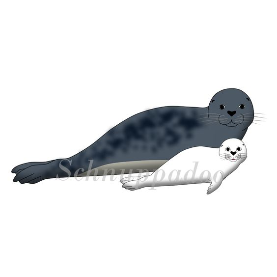 Eine Robbe und ihr Robbenbaby von Schnuppadoo