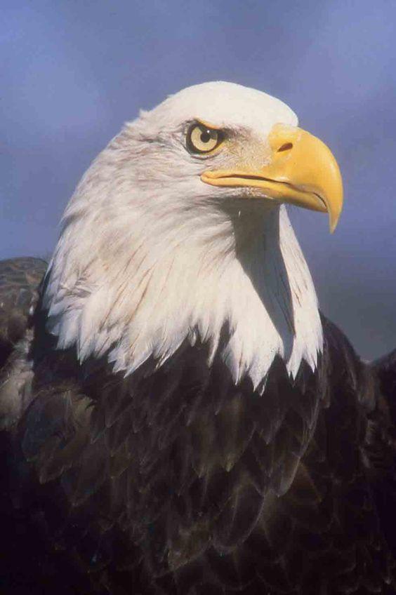 Eagles At Lake Monroe Home Page