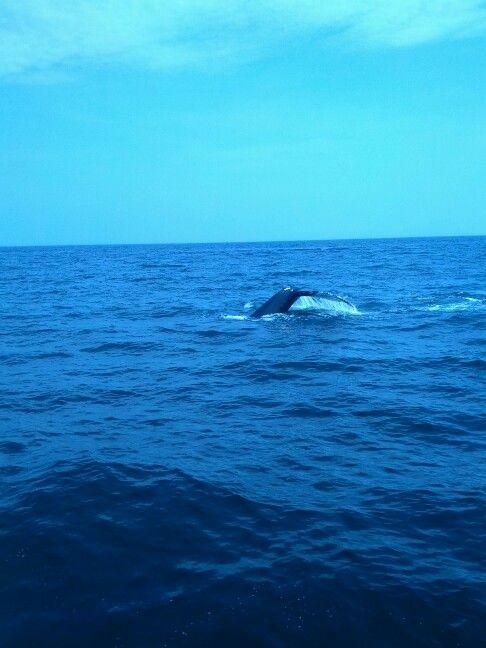 Cape Ann Whale Watch. Gloucester, MA 2013