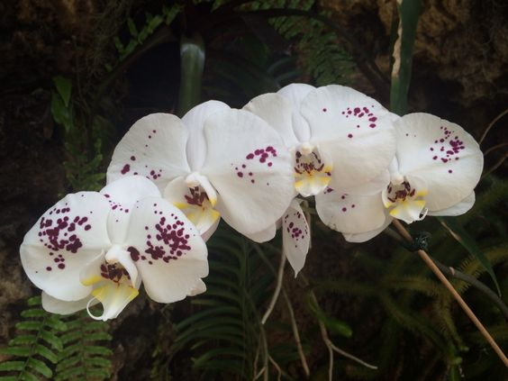 Lovely orchids...