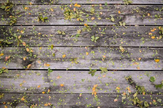tablones de madera con hojitas