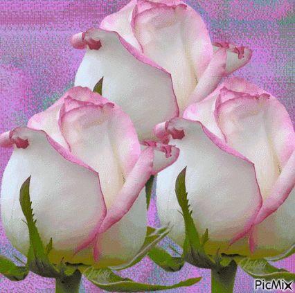 SUEÑOS DE AMOR Y MAGIA: Rosas para ti
