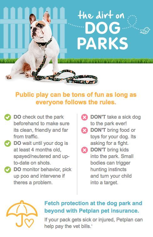 The Dirt On Dog Parks Infographic Dog Park