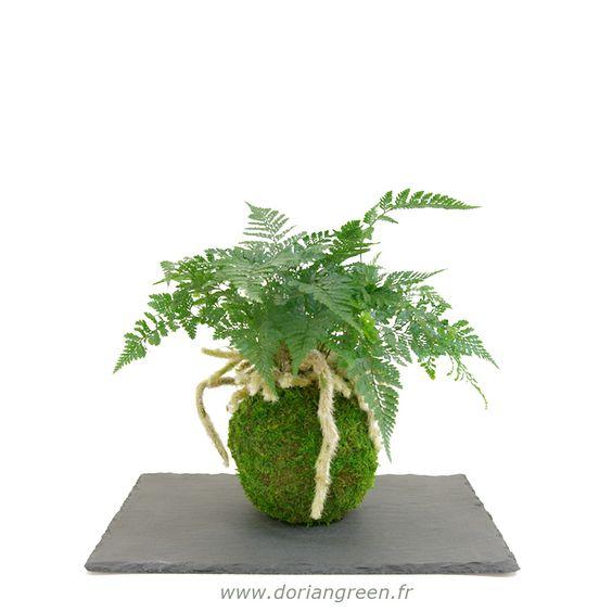 Kokedama kokedama davallia foug re davallia sur boule de mousse v g tale mousse douce Mousse vegetale deco idees