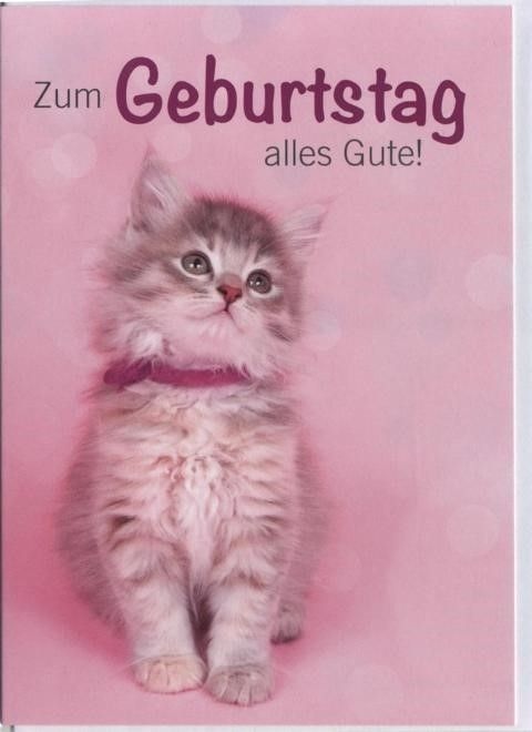 Geburtstag Bilder Katze Szuletesnap