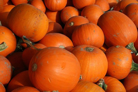 Pumpkins! | Flickr: Intercambio de fotos