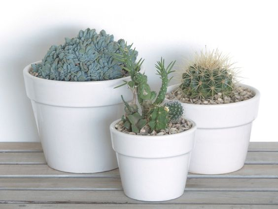 DIY Tips no.2 - How to make a mini succulent garden in a pot