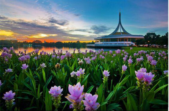 """Le Palauan Rama 9 à Bangkok PEst un parc avec  des jardins botaniques. Le plus grand à Bangkok Il a une superficie d'environ 500 hectares, il se distingue par «Hall Rachamongkol"""" qui est situé au milieu d'un grand étang. Il y a de  beaux jardins divisé en différentes zones de décors attractif pour ce prendre en photos. http://www.kanchanaburi-vacances.com/"""
