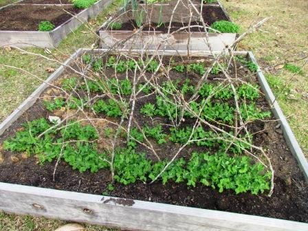 Survival Gardening -- This man has some awesome tips and ideas for the ultimate survival gardens!