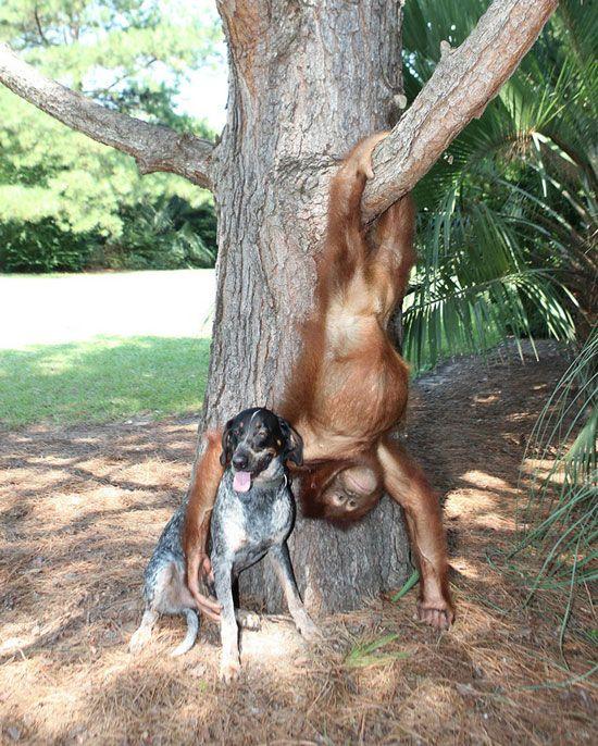 :-) monito y perrito