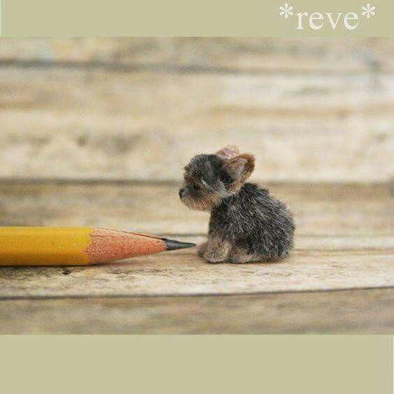 Awesome Yorkshire Terrier Dogs Info Is Offered On Our Website Take A Look And You Will Not Be Sorry Miniature Yorkie Puppies Felt Animals Miniature Animals