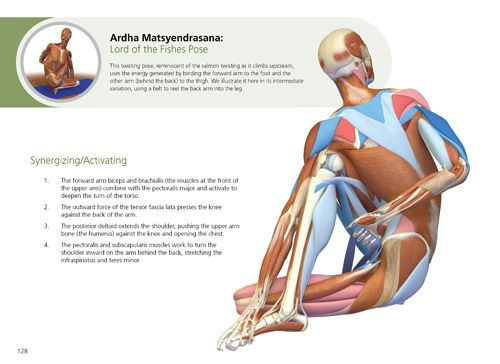 45+ The key muscles of yoga volume 1 ray long inspirations