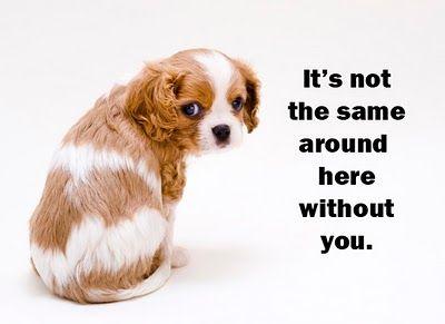 Resultado de imagem para miss you + animals